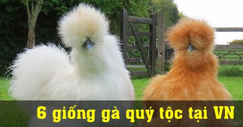 6 giống gà quý tộc có giá hàng ngàn USD tại Việt Nam