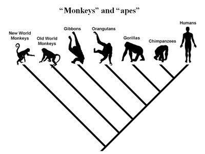 ảnh con người,tiến hóa,lịch sử loài người,vượn,vượn người