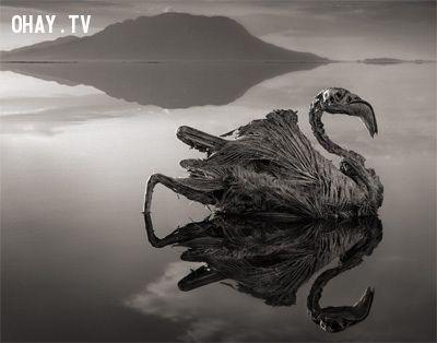 Hồ Natron ở Tanzania