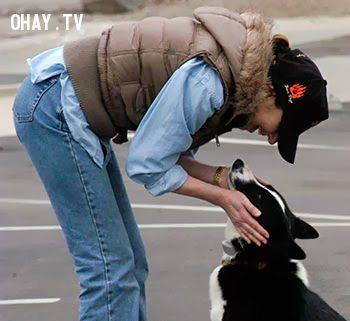 ảnh huấn luyện chó,huấn luyện cún cưng,cún cưng,cách nuôi chó,cách nuôi cún