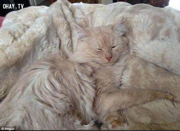 Hình ảnh hài hước, đáng yêu của chó, mèo khi ngụy trang