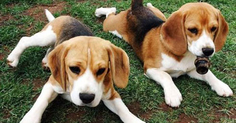 Câu chuyện về 2 chú chó và bài học sâu sắc cho người từng gặp thất bại