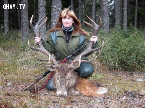 ảnh động vật,săn bắn,chiến lợi phẩm,săn bắn động vật