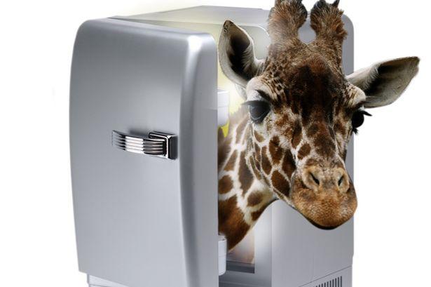 """""""Làm thế nào để đưa một con hươu cao cổ vào trong tủ lạnh???"""""""