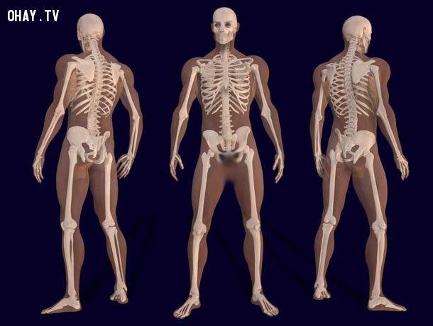 ảnh sự thật,đáng ngạc nhiên,cơ thể con người,có thể bạn chưa biết,fact