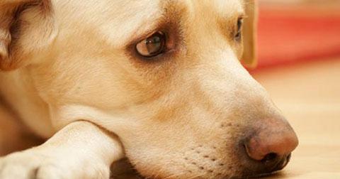 5 bài học bạn có thể học được từ những chú chó