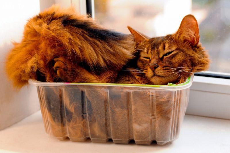 ảnh mèo trong hộp,mèo vui nhộn,mèo dễ thương