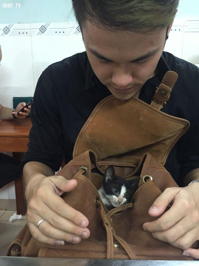Chú mèo nhỏ rất đáng yêu có tên là Salem