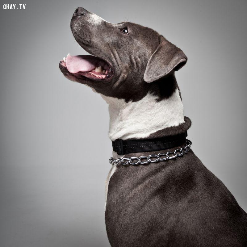 ảnh bài học cuộc sống,suy ngẫm,lòng trung thành của loài chó,loài chó,cún cưng