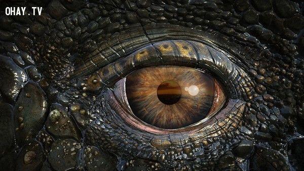 Thị lực khủng long phụ thuộc vào độ lớn và vị trí đôi mắt