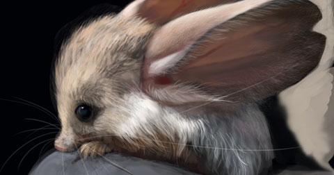 Loạt hình ảnh những động vật dễ thương bạn chưa bao giờ nghe nói đến