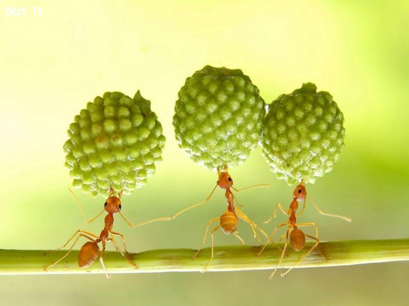 ảnh khỏe nhất,bọ hung,bọ cánh cứng,vô địch,động vật nhỏ bé