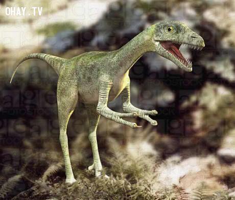 Loài khủng long nhỏ bé nhưng cực kì độc ác