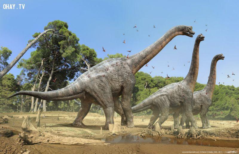 Khủng long ăn cỏ Brachiosaurus