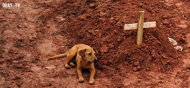 Câu chuyện về những chú chó trung thành