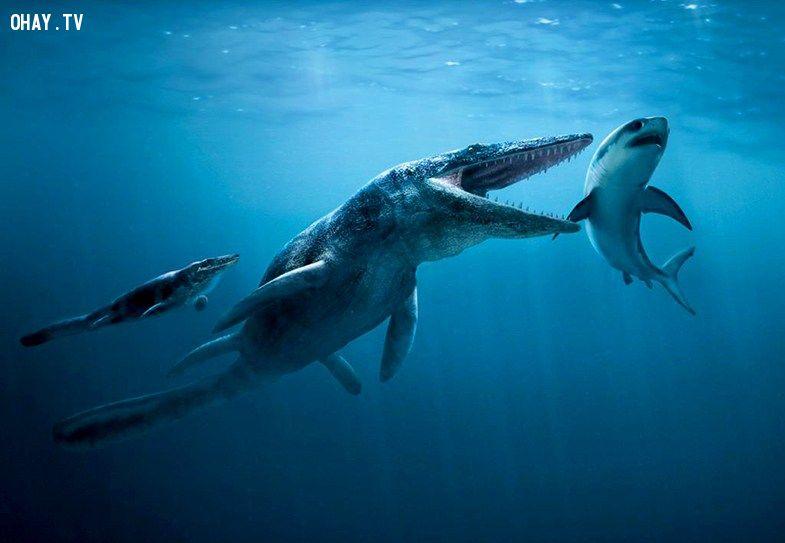 ảnh khủng long,tiền sử,khổng lồ,quái vật,quái vật thời tiền sử