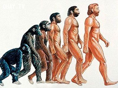 quá trình tiến hóa của loài người