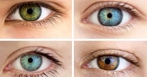 Top 10 loại thực phẩm có thể thay đổi màu mắt trong 60 ngày