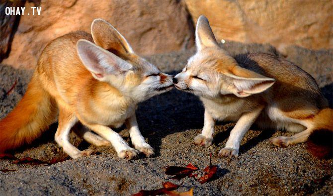ảnh hôn nhau,con vật hôn,nụ hôn