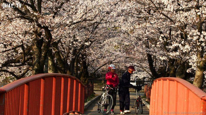 ảnh An toàn,thành phố đáng sống,Nhật Bản,Singapore,Sydney,Sống an toàn,thân thiện