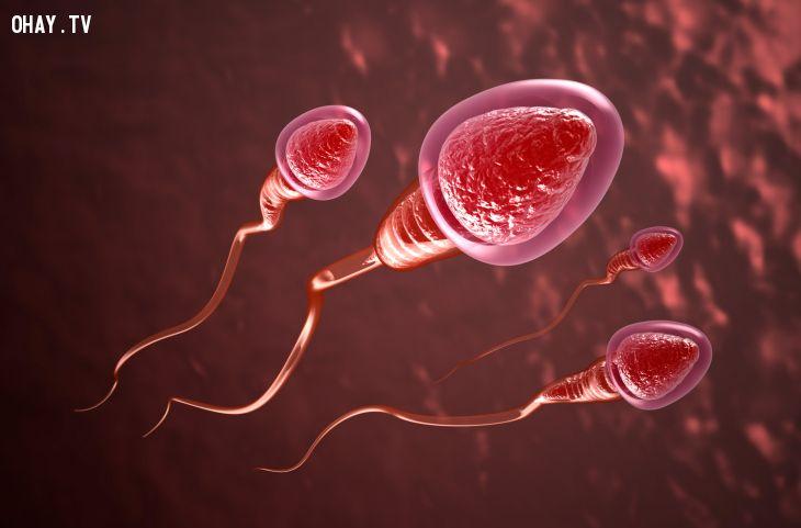 Lá ổi làm tăng số lượng tinh trùng ở nam giới