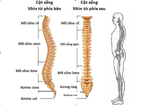 Lỗi thiết kế trên cơ thể con người