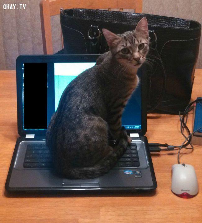 ảnh nuôi mèo,mèo nghịch ngợm,người nuôi mèo,vật nuôi