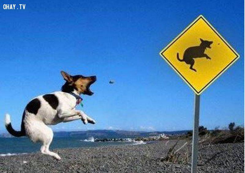 ảnh chó hài hước,cún hài hước,thú cưng