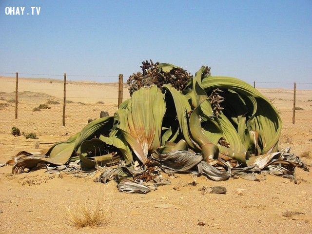 ảnh kỹ năng sinh tồn,tìm kiếm nguồn nước,lạc trên sa mạc