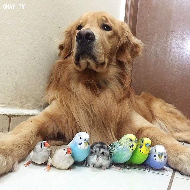 ảnh chú chó bob,động vật dễ thương,tình bạn của động vật