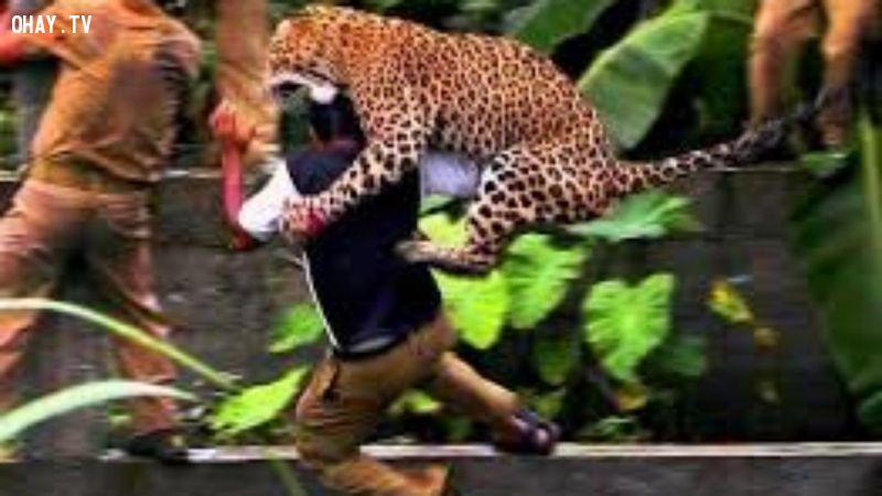 ảnh động vật tấn công,động vật hung dữ