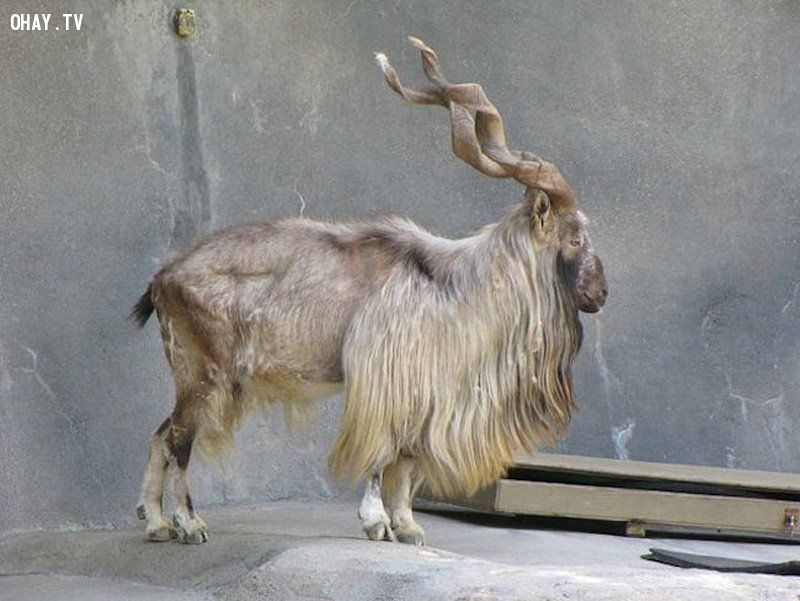 ảnh động vật,tuyệt chủng