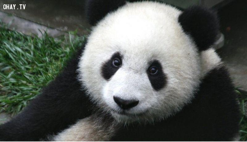 ảnh động vật,những loài động vật,fact,có thể bạn chưa biết
