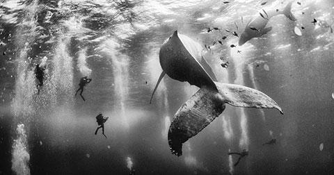Những bức ảnh đẹp nhất tại cuộc thi ảnh Du lịch Địa lý Quốc gia năm 2015