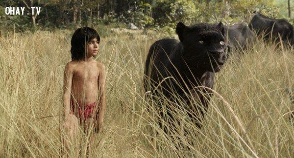 The Jungle Book (2016): Rừng già Ấn Độ và cậu bé Mowliảnh freedoenter,the jungle book,cậu bé rừng xanh,trailer phim