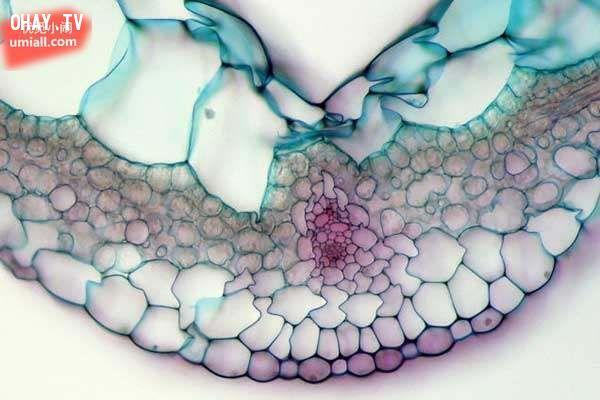 ảnh lăng kính hiển vi,thế giới sinh vật,kính hiển vi