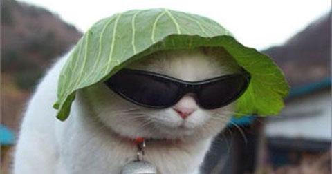 Ảnh chế: Tâm sự chàng mèo Nolan