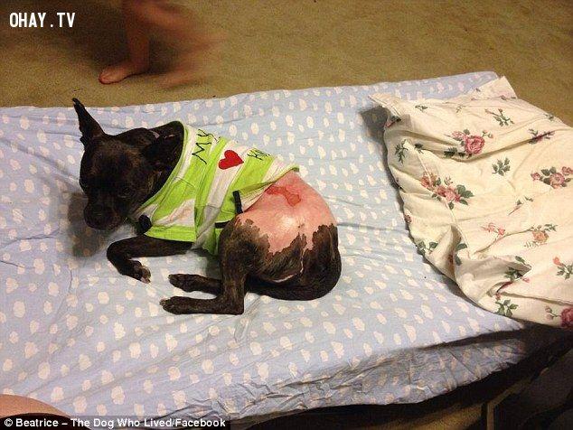 ảnh chó tội nghiệp,chó đáng thương,hành hạ động vật,tội phạm,ngược đãi động vật