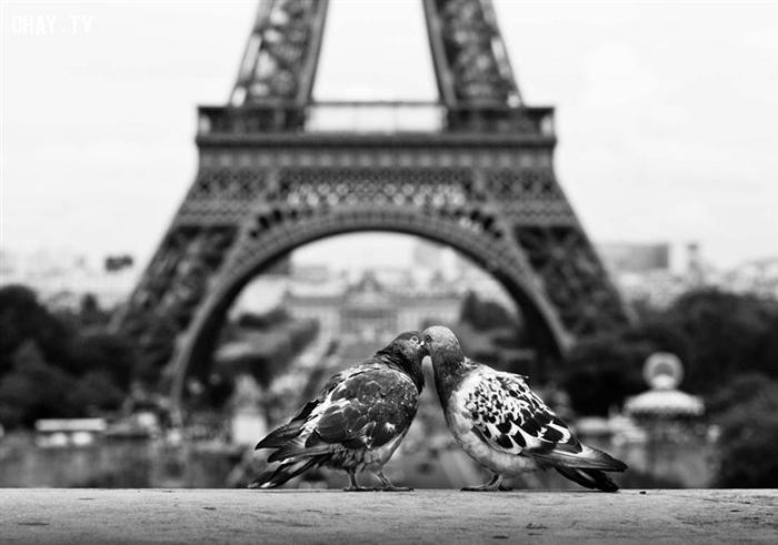 ảnh động vật,hôn nhau,động vật hôn nhau