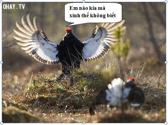 ảnh khoảnh khắc bá đạo,khoảnh khắc,loài chim
