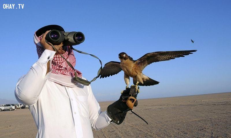 ảnh nuôi chim ưng,huấn luyện chim ưng,chim ưng