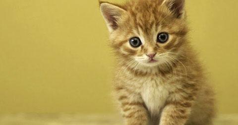 Ngắm thú cưng mà muốn yêu ngay!!