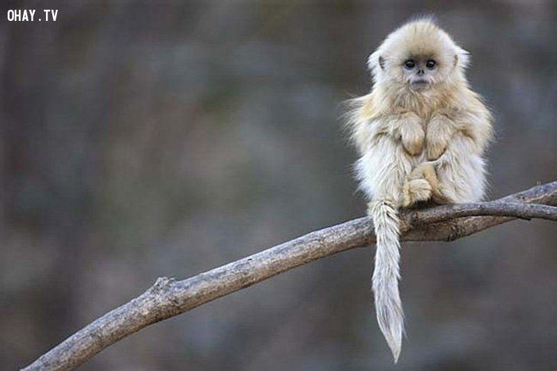 ảnh động vật,tuyệt chủng,động vật tuyệt chủng,nguy cơ tuyệt chủng