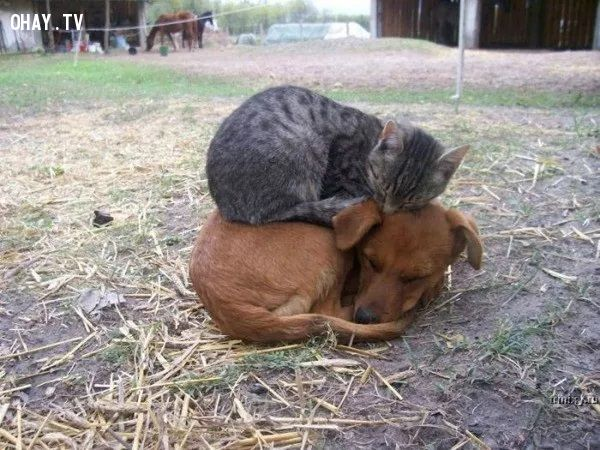 ảnh động vật,động vật thể hiện tình cảm,động vật đáng yêu