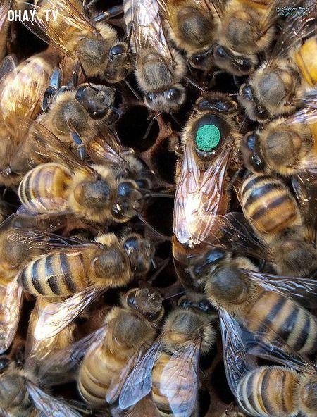 ảnh động vật,giao phối,động vật giao phối,giao phối tàn ác