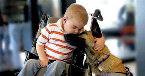 Câu chuyện cảm động của một chú chó với cậu bé mắc bệnh hiểm nghèo