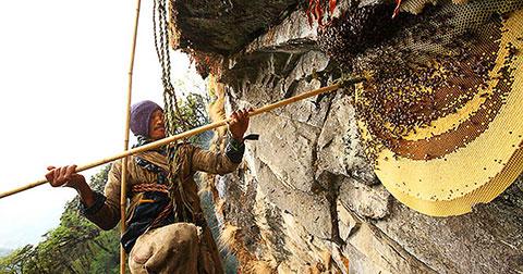 Thu hoạch mật ong ở Nepal: Chết người nhưng vẫn được duy trì