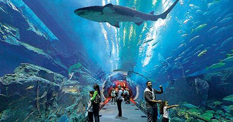Bể cá Dubai và vườn thú dưới nước
