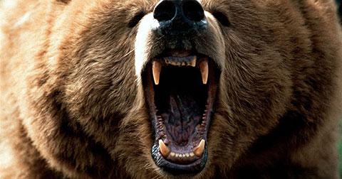 Thoát chết dưới nanh gấu nhờ... bài hát Baby của Justin Bieber