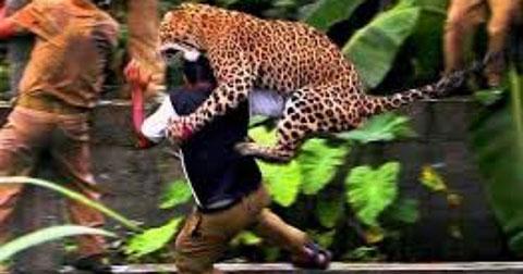 Khi động vật hoang dã tấn công con người